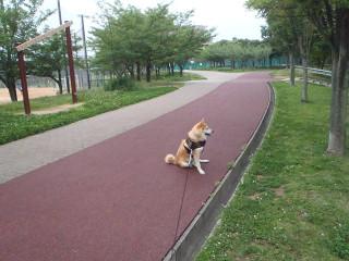 男同士の散歩_e0371017_12000372.jpg