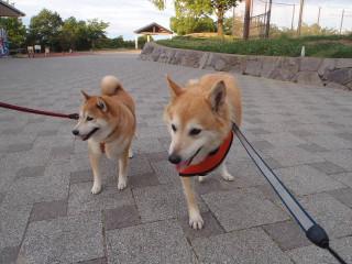 男同士の散歩_e0371017_12000462.jpg
