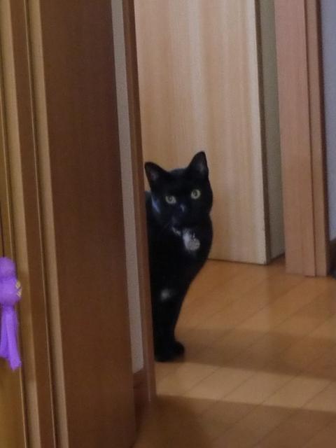 猫のお留守番 くろまめくん編。_a0143140_22152881.jpg