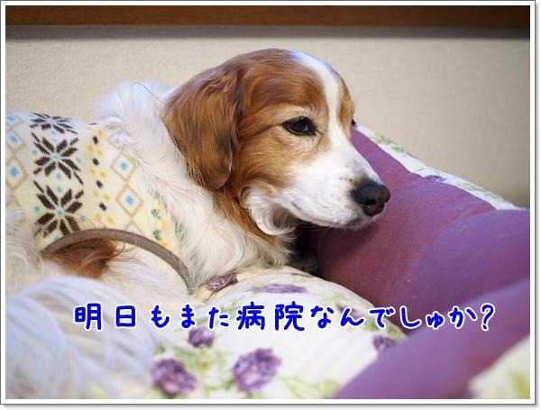 d0013149_00520339.jpg
