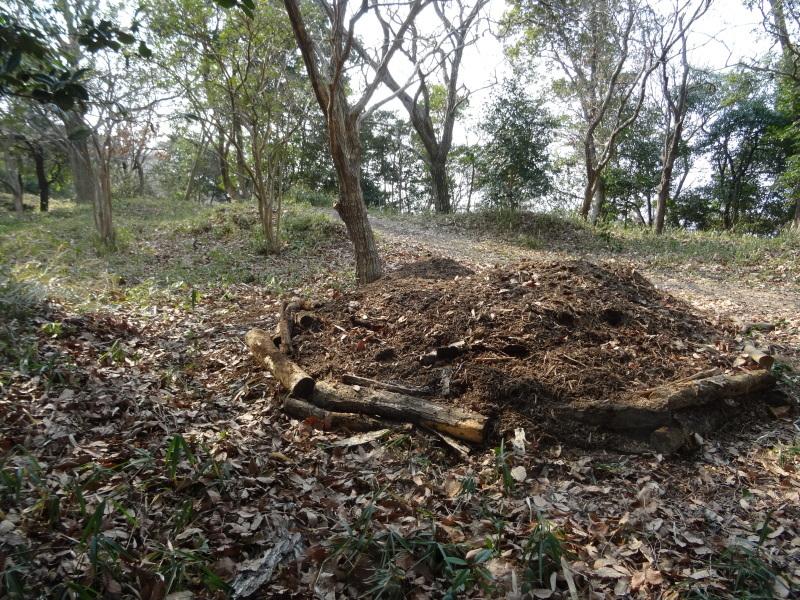 カブトムシの幼虫の保護&伐採木の片付け・・・うみべの森_c0108460_22095086.jpg