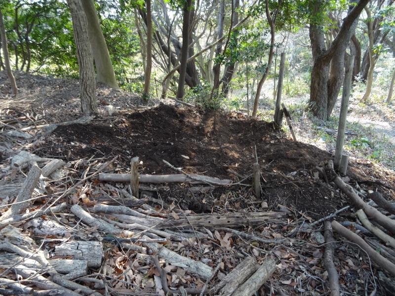 カブトムシの幼虫の保護&伐採木の片付け・・・うみべの森_c0108460_22095471.jpg