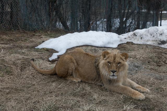 東北サファリパーク~近寄る動物たち_a0158797_22501728.jpg