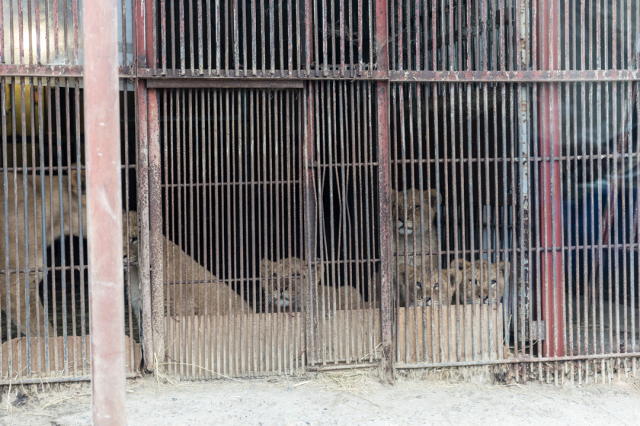 東北サファリパーク~近寄る動物たち_a0158797_22533041.jpg