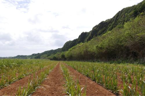 海界の村を歩く 太平洋 北大東島(沖縄県)_d0147406_16035020.jpg