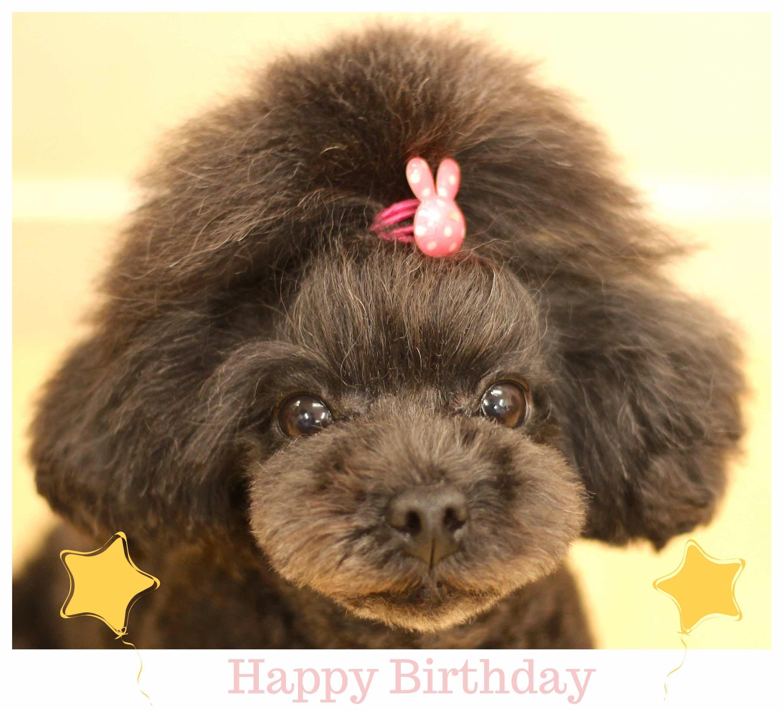 Happy Birthday ♡ クララちゃん_d0060413_17190799.jpeg