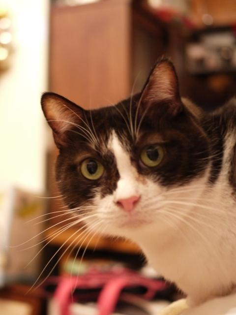 お誕生日猫 らぃら7歳編。_a0143140_0141140.jpg