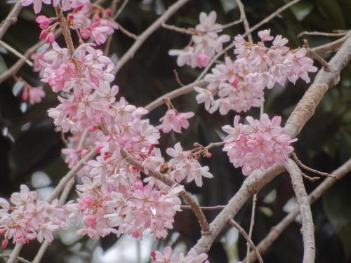 春分の日に_e0240147_23032263.jpg
