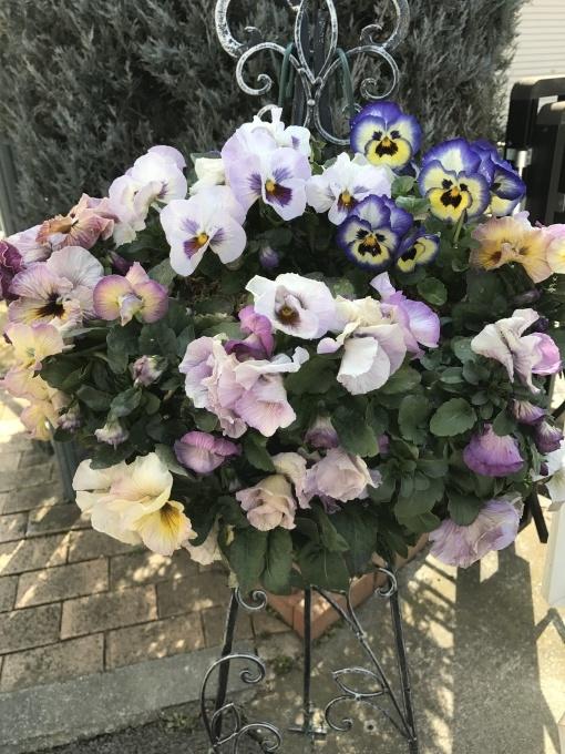 春は、そこまで🍀_f0303858_21333028.jpg