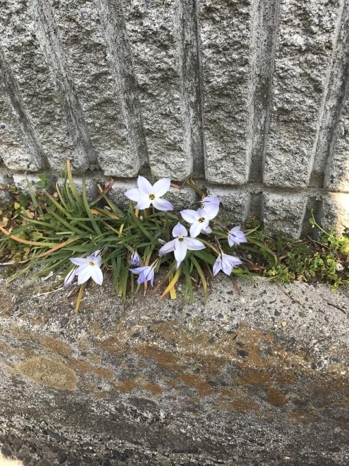 春は、そこまで🍀_f0303858_21341367.jpg