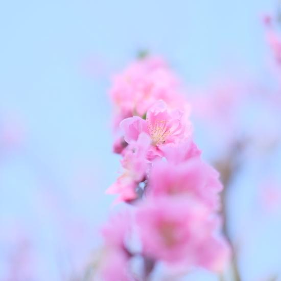 春を探そう! フォトツアー開催します!_c0073387_02344627.jpg