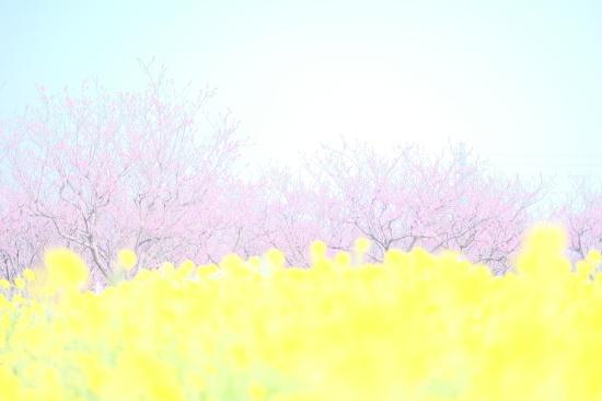 春を探そう! フォトツアー開催します!_c0073387_02345240.jpg