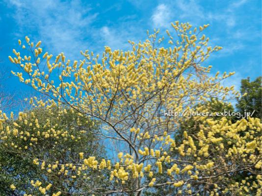春の花 いろいろ_a0157091_20323657.jpg