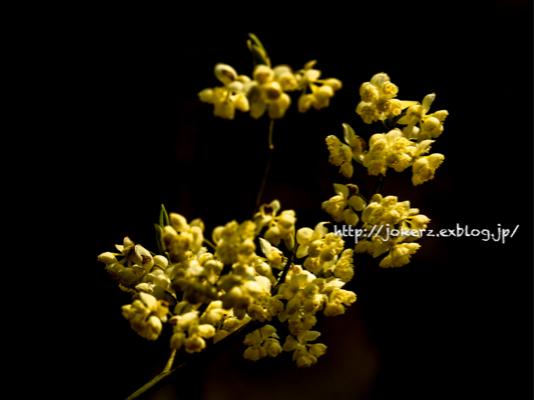 春の花 いろいろ_a0157091_20332540.jpg
