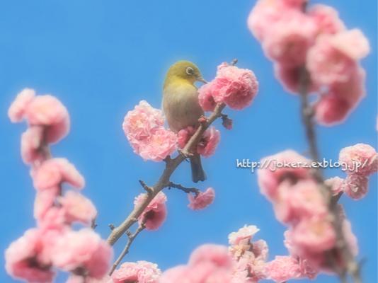 春の花 いろいろ_a0157091_20353351.jpg