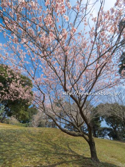 春の花 いろいろ_a0157091_20363735.jpg