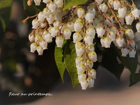 春のプレリュード♪_c0098807_19593909.jpg