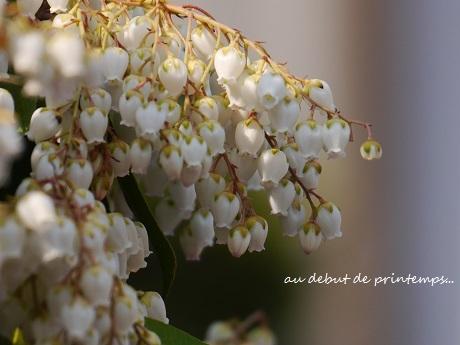 春のプレリュード♪_c0098807_19594808.jpg