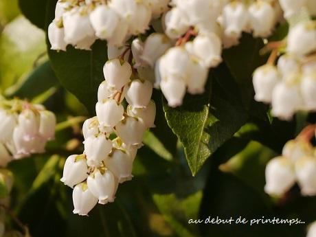 春のプレリュード♪_c0098807_19595195.jpg