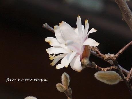 春のプレリュード♪_c0098807_20094871.jpg