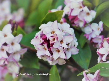 春のプレリュード♪_c0098807_20581129.jpg