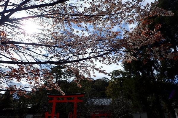 名勝和歌の浦クリーンアップ 玉津島神社と妹背山_c0367107_15440144.jpg