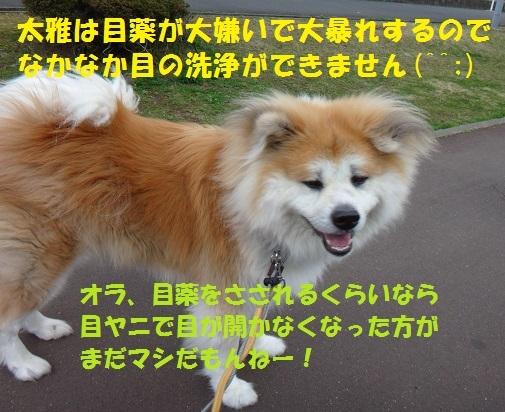 f0121712_15283468.jpg