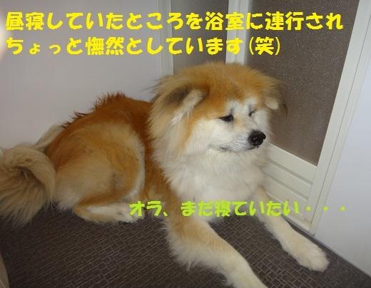 f0121712_16263514.jpg