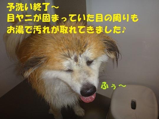 f0121712_16310090.jpg