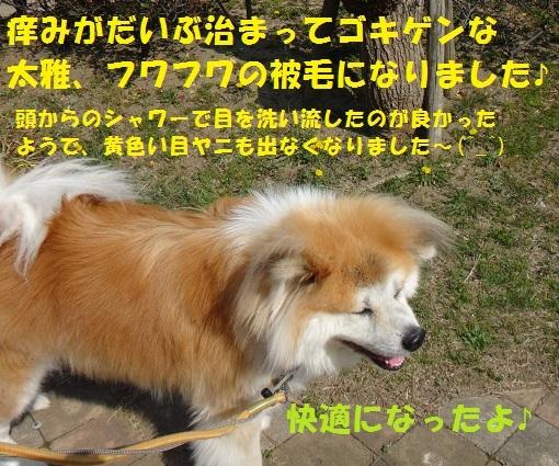 f0121712_17005727.jpg