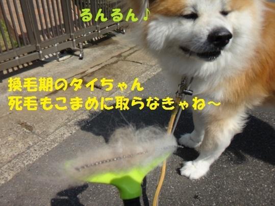 f0121712_17133892.jpg
