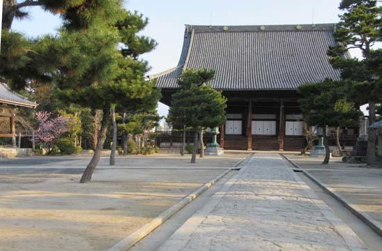 知恩寺のフジサクラ_e0048413_16160762.jpg