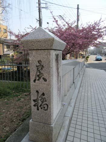 戻り橋 河津桜_e0048413_20540958.jpg