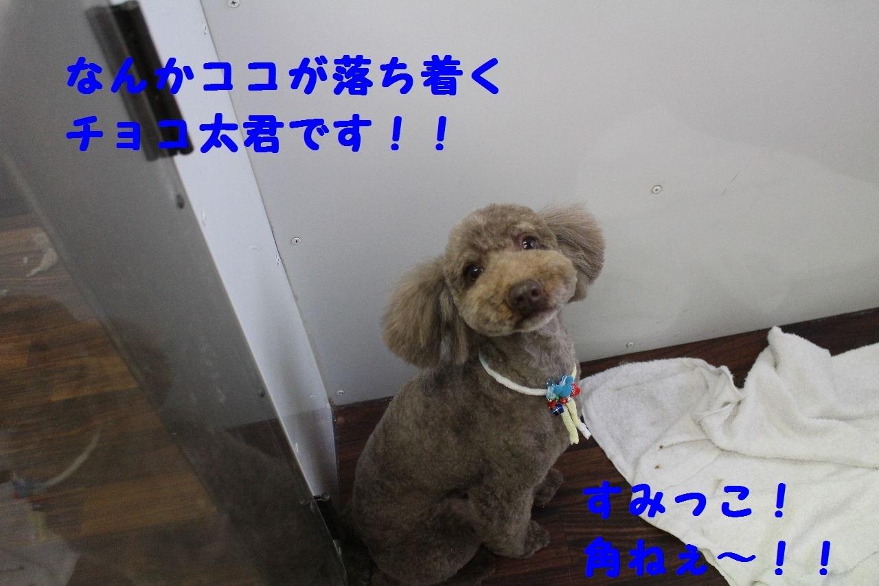 b0130018_08430059.jpg
