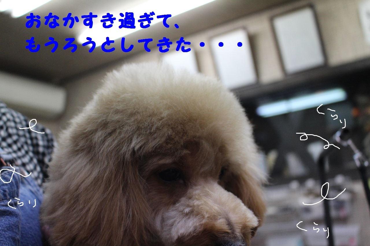 b0130018_20134306.jpg