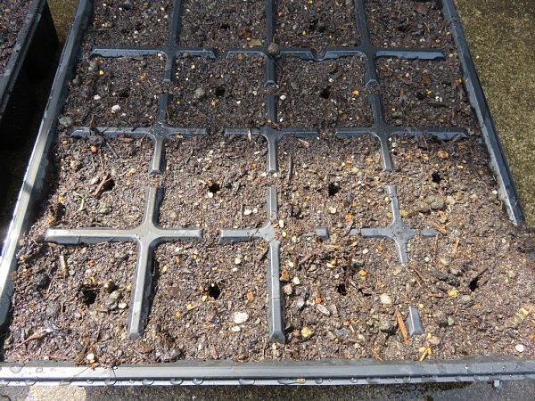 2017年3月22日 サニーレタスの種を蒔きました !_b0341140_1331371.jpg
