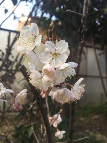 桜咲く_c0184989_10242099.jpg