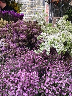 春のお花を探しにColumbia Road flower marketへ_f0238789_20094710.jpg
