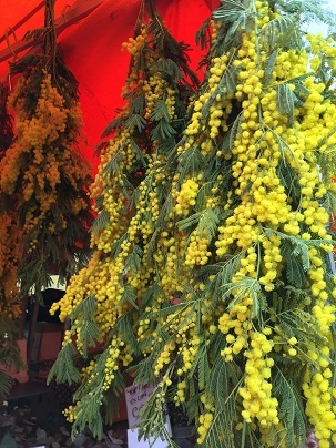 春のお花を探しにColumbia Road flower marketへ_f0238789_20100480.jpg