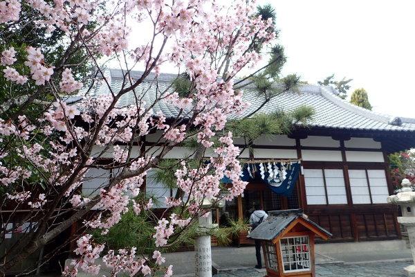 春の贈り物_c0367107_16401716.jpg