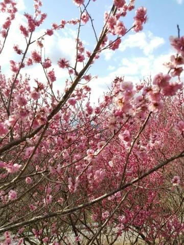 春のお花があちこちに_f0343531_18384723.jpg