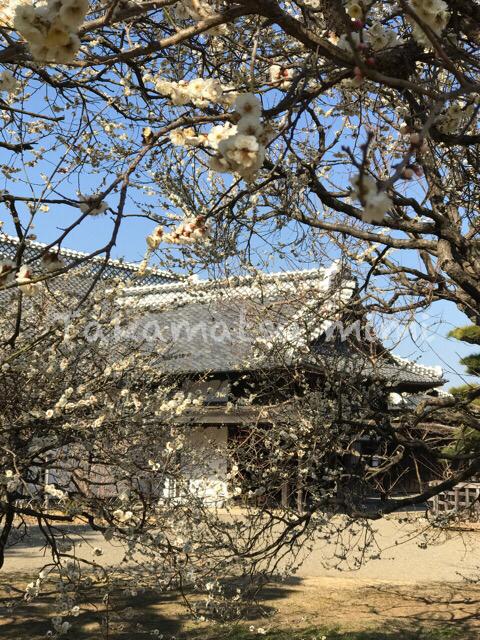 水戸は梅の季節も忙しい_d0357449_22395206.jpg