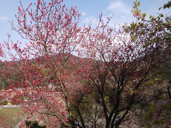 里山の風景_b0093754_20542234.jpg