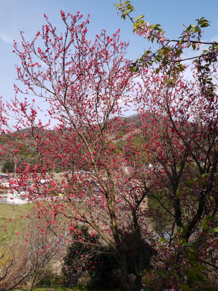 里山の風景_b0093754_20565163.jpg