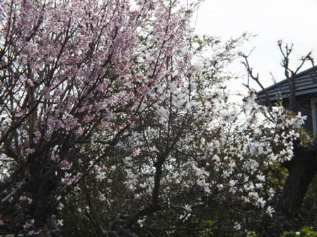 春爛漫_b0214473_19204376.jpg