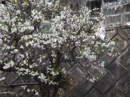 春爛漫_b0214473_19205414.jpg