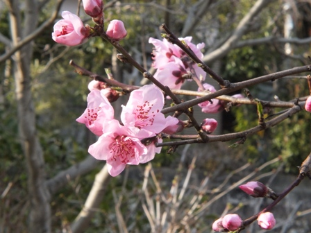 春爛漫_b0214473_19211825.jpg