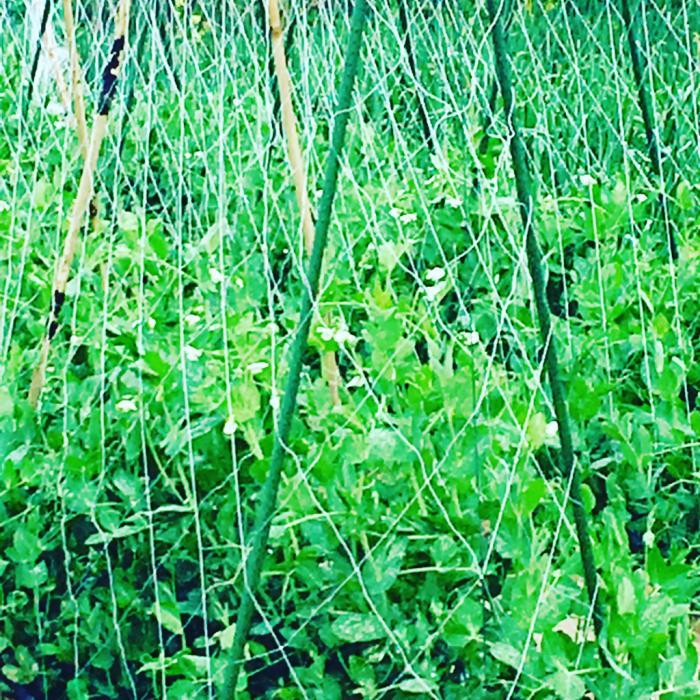 ブリスファーム 春の植え付けday_c0116778_06382506.jpg