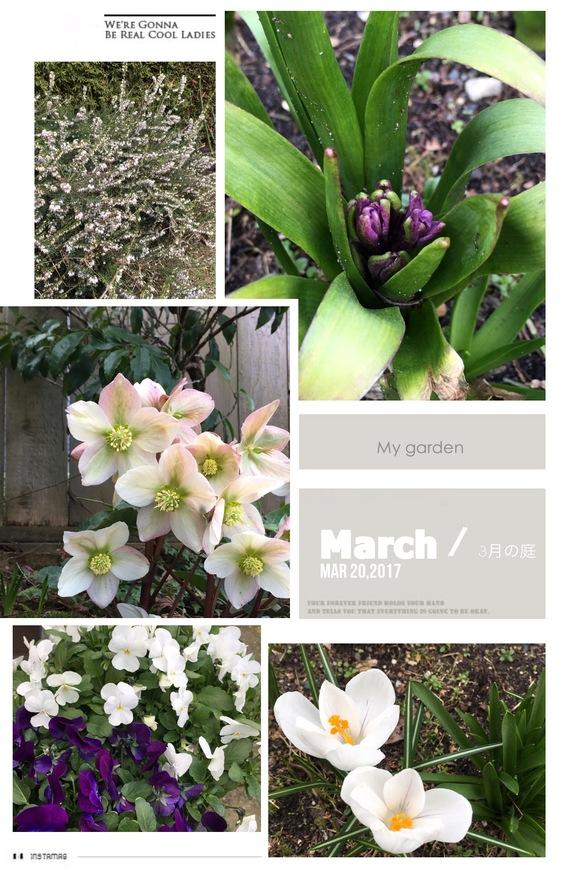 3月の庭便り_d0129786_14364613.jpg