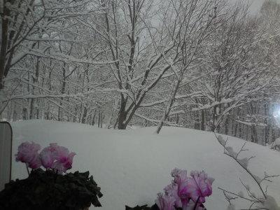 3月23日(木)  0℃  雪_f0210811_07053496.jpg